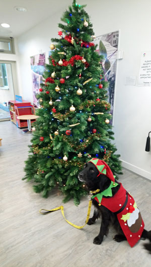Brodie the dog sits by a Christmas tree